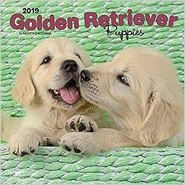 Amazoncom Golden Retriever Puppies 2019 12 X 12 Inch Monthly