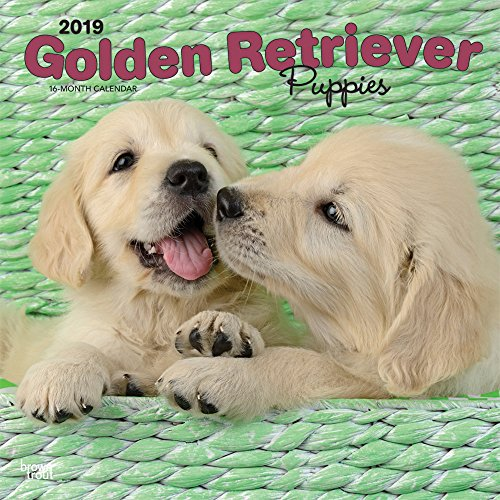 Golden Retriever Puppies 2019 12 x 12 Inch Monthly Square Wall Calendar, Animals Dog Breeds Golden Puppies (Multilingual Edition)