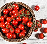 organic cherry tomatoes seeds - Organic Matt's Wild Cherry Tomato Seeds - 2 SEED PACKETS! - Over 100 Heirloom Non-GMO USDA Organic Seeds