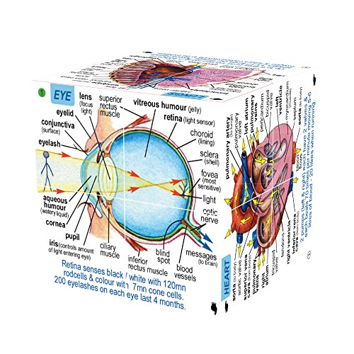 ZooBooKoo Human Body Systems and Statistics Cube Book - Anatomy Game