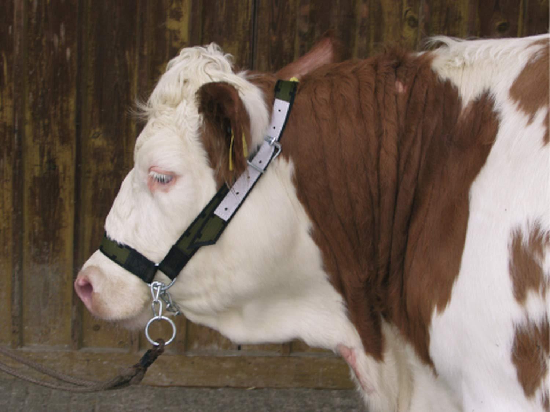 Capezza per bovini con barbozzale Agritura