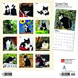 Tuxedo Cats 2019 12 x 12 Inch Monthly Square Wall