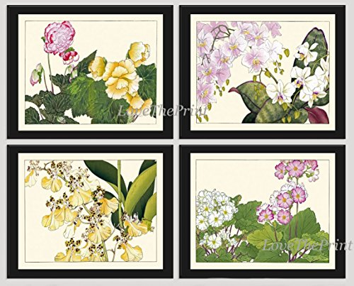 Island Plate Block (Orchid Tropical Flower Art Print Set of 4 Antique Japanese Woodblock Beautiful Botanical Pink White Yellow Garden Nature Home Room Wall Decor Unframed)