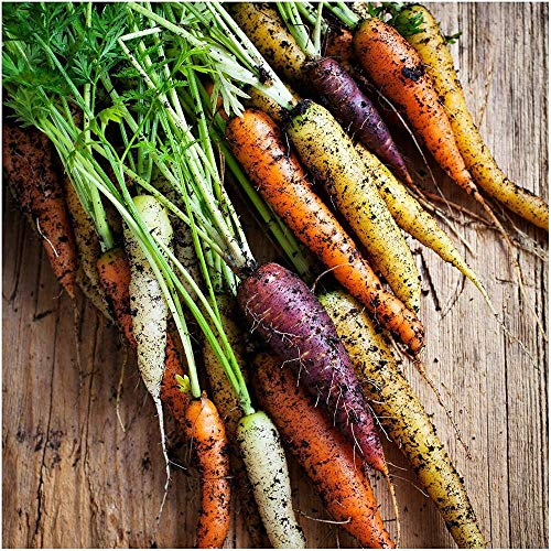 Rainbow Mixed Carrot Seeds, 500+ Premium Heirloom Seeds, Rare Species, Colorful Blends (Isla's Garden Seeds), 85% Attractive, Non-GMO, Highest Quality