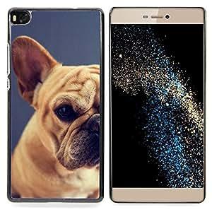 """For Huawei Ascend P8 (Not for P8 Lite) Case , Raza Pug Puppy Dog Pet Boston Terrier"""" - Diseño Patrón Teléfono Caso Cubierta Case Bumper Duro Protección Case Cover Funda"""