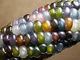 Glass Gem Corn - Rare Heirloom Variety (100+ Seeds) by PowerGrow