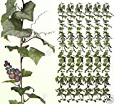 SIX 6' Artificial Grape Garland Silk Plants 632GF Ivy
