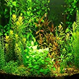 (AGS1000 *Ambizu*) New 1000pcs Aquarium Grass Seeds Water Aquatic Plant Seeds (Mix Included 15 Kinds)