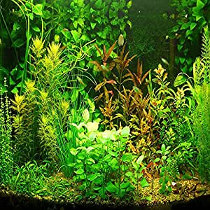 (AGS1000Ambizu New 1000pcs Aquarium Grass Seeds Water Aquatic Plant Seeds (Mix Included 15 Kinds)