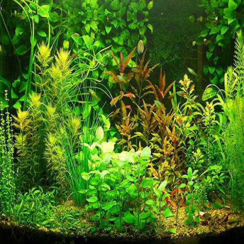 (AGS1000 *Ambizu*) New 1000pcs Aquarium Grass Seeds Water Aquatic Plant Seeds (Mix Included 15 Kinds)