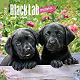 Black Labrador Retriever Puppies 2018 7 x 7 Inch Monthly Mini Wall Calendar, Animals Dog Breeds Retriever Puppies (Multilingual Edition)