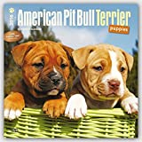 American Pit Bull Terrier Puppies 2016 Square 12x12 (Multilingual Edition)