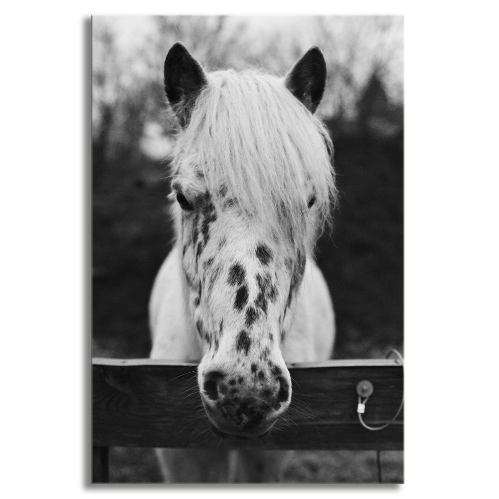 Kalawa canvas art black and white horse canvas art print painting wall picture decor posters wall decor gift contemporary artwork ready to hang 16w x
