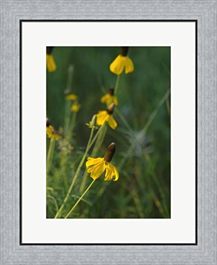 Amazon shades of nature yellow flowers green center i by gordon shades of nature yellow flowers green center i by gordon semmens framed art print wall picture mightylinksfo
