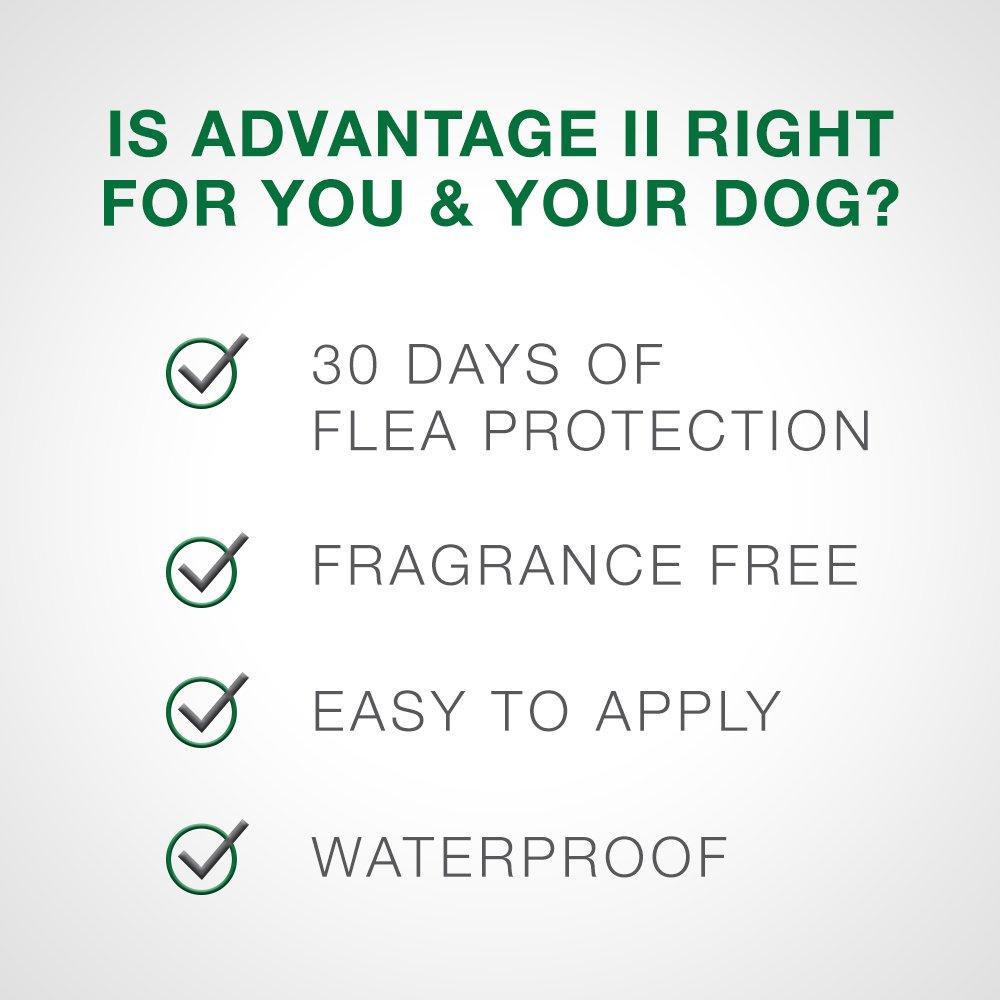 Bayer Advantage II Extra Large Dog 6Pack by Bayer Animal Health (Image #5)
