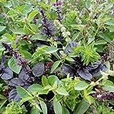 11 Arten - Schöne Mischung Basilikum - 200 Samen