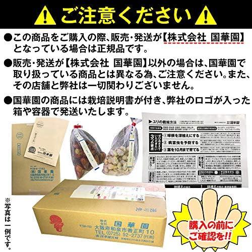 国華園 菊苗 福助・管物苗+資材セット 1組