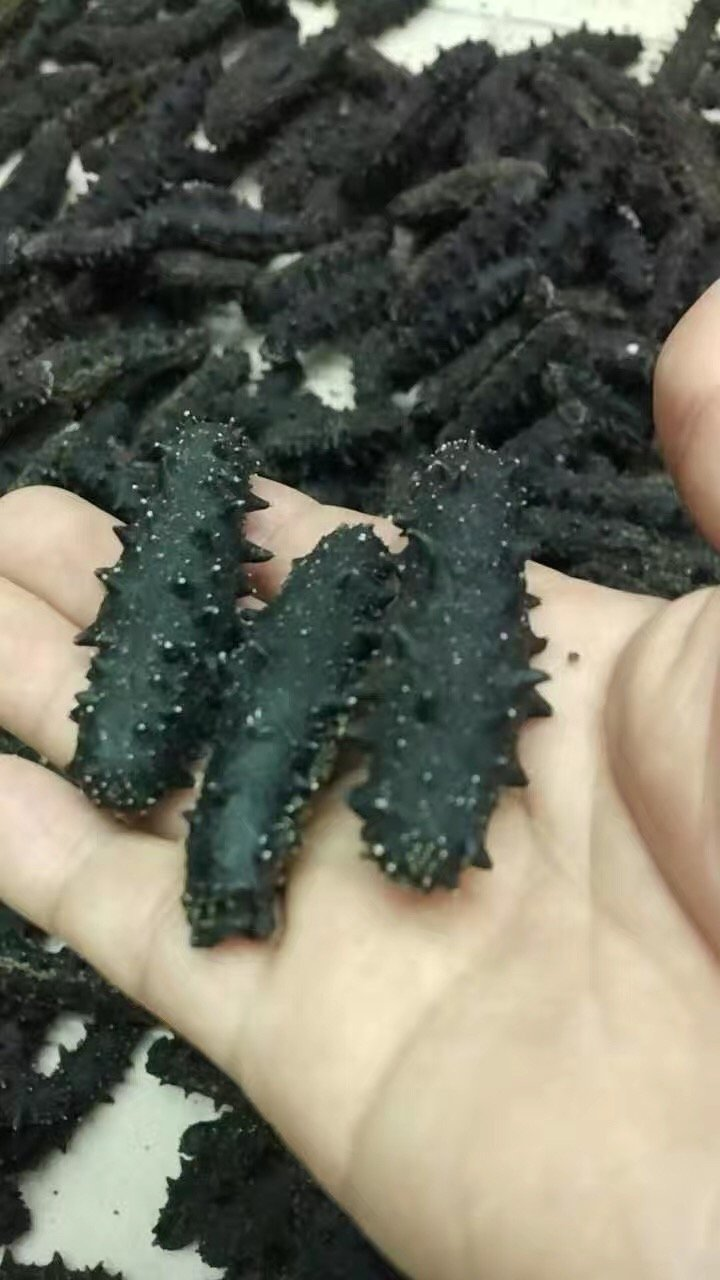 Tomox supply of Dalian Tang Tang dry sea cucumber sea cucumber less hard 60-90 head 500g