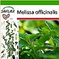 SAFLAX - Lemon Balm - 150 seeds - With soil - Melissa officinalis