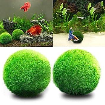 JIALONGZI Bola de Musgo para Acuario Forma de Bola, Ideal para Crecimiento de Algas: Amazon.es: Productos para mascotas