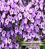 HELIOTROPE Fragrance Oil - 100% Premium Grade Uncut Oil - An unusual floral with a powdery vanilla finish, and just the barest trace of licorice - BULK Fragrance Oil By Oakland Gardens (030 mL - 1.0 fl oz. Bottle)
