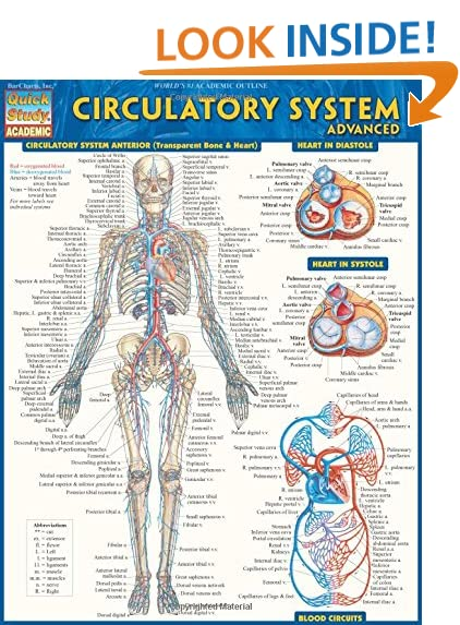 Circulatory System Amazon Com