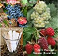 Bulk 2 Grape Vine Seeds Survival Seeds 170 Seeds Upc 650327337176 + 3 Plant Markers Cabernet Seeds