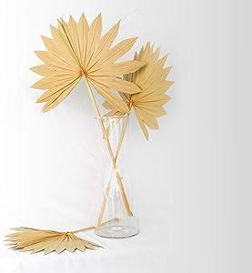 Boho City Blooms Dried Palm Leaves | 5 pcs 13-19 in Premium Natural Dried Palm Fans | Boho Decor | Neutral HomeHouse Decor | Wedding Decor | Leaves + Flower + Leaf Decor
