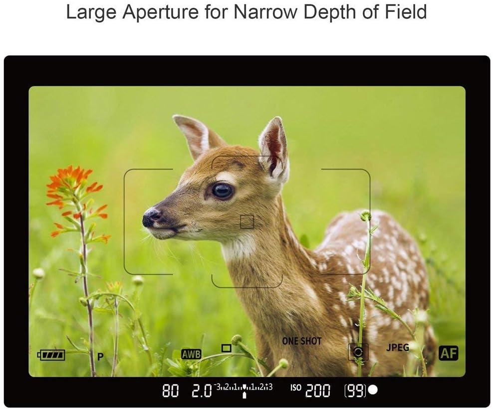 ESDDI 77mm Graufilter ND1000 Filter Neutral Dichte 3.0 Filter ND 1000 77 mm Vlog und Make-up 10 Stopp Belichtungsfilter Deutschland Schott Optisches Glas Video