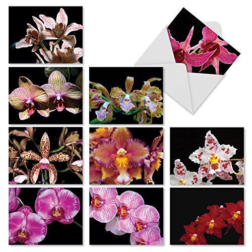 Disney Orchid - 4