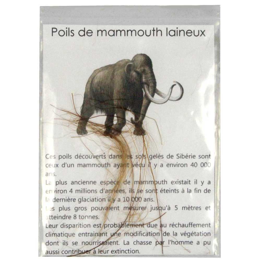 Naturosph/ère Brins de Poils de mammouth laineux Min/éraux et fossiles C21