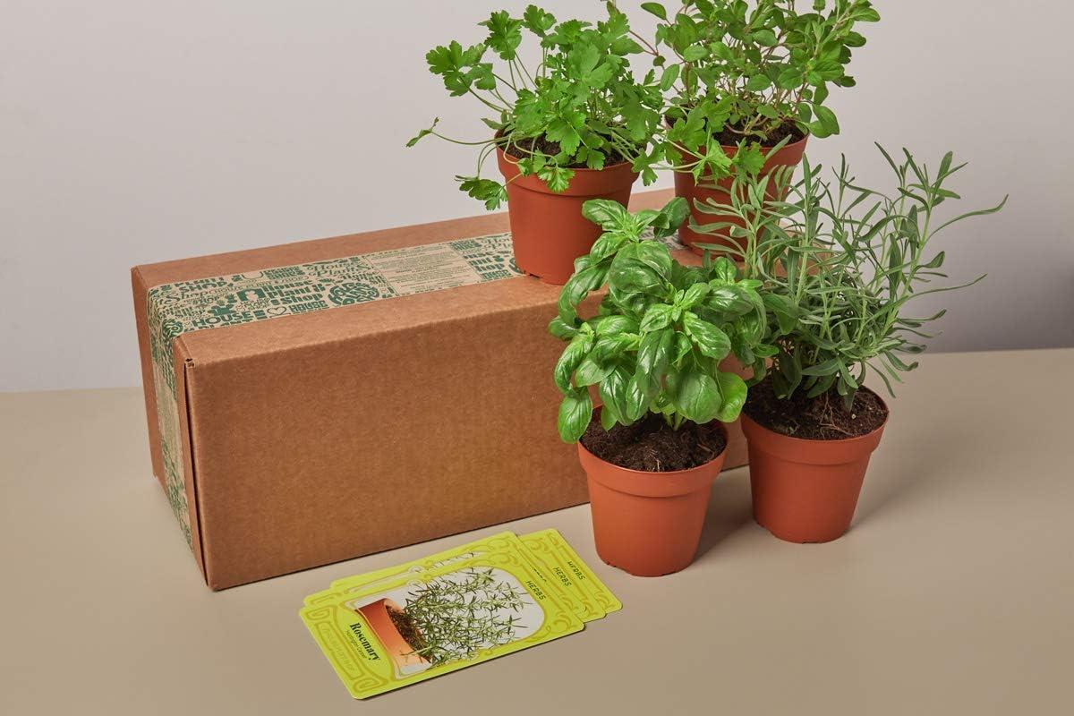 House Plant Box - Subscription: Seasonal Garden Plant Box