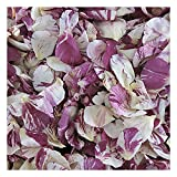 Rose Petals Raspberry Swirl Preserved Freeze-dried Merlot & Ivory Rose Petals by Flyboy Naturals- 120 cups Rose Petals