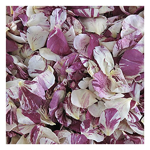 Rose Petals Raspberry Swirl Preserved Freeze-dried Wine & Ivory Rose Petals by Flyboy Naturals- 30 cups Rose Petals