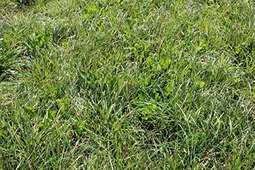 Cool Season Pasture Mix