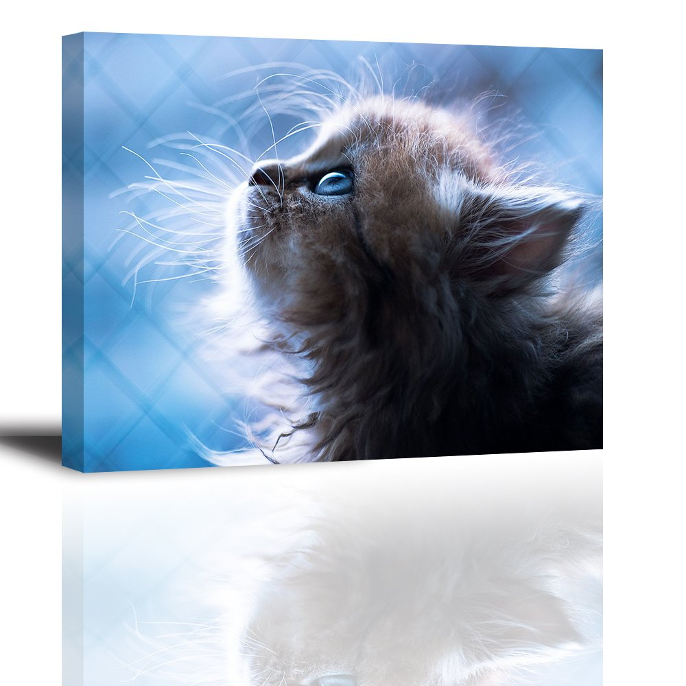 Cute Animal Wall Art for Bedroom, Lovely Pet Canvas Prints Decor of Adorable Cat Looking Up Picture, Innocent Hairy Kitten makes Pity and Love (Waterproof, Bracket Mounted Ready Hanging, 1'' Thick)
