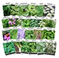 Sow Right Seeds - Herb Garden Collcetion