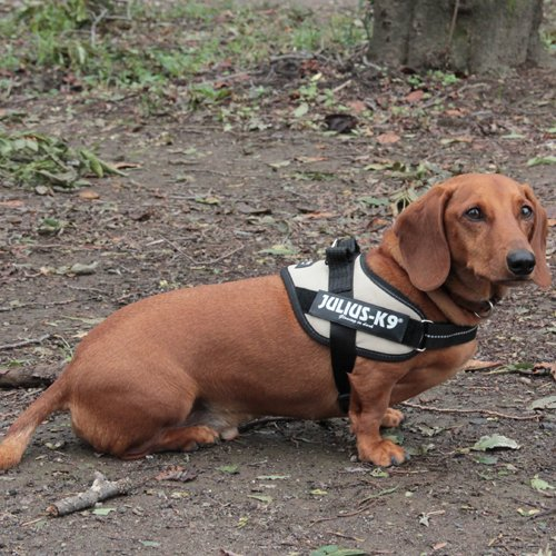 Julius-K9 162SN-0 Power Harness, Tamaño 0, Sol: Amazon.es ...