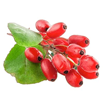 Goji Berry 50 Seeds - Lycium Chinense/Lycium Barbarum, Chinese Wolfberry Plant, Perennial Non GMO Super Fruit, Easy to Grow Goji Berries Seeds for Planting : Garden & Outdoor