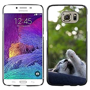 Super Stella Slim PC Hard Case Cover Skin Armor Shell Protection // M00107005 Cat Pet Gata Animal Feline Grey // Samsung Galaxy S6 (Not Fits S6 EDGE)