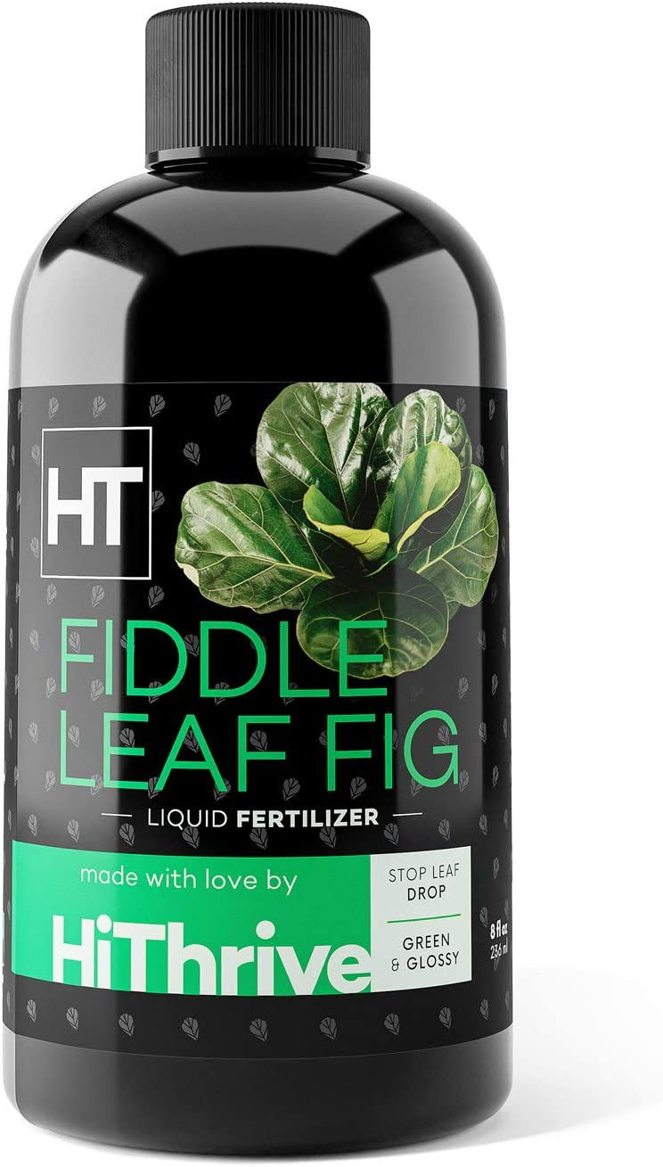Fiddle Leaf Fig Fertilizer - Liquid Plant Food for Ficus Plants and Figs - Grow Tall Trees with Healthy Leaves - Use with All Varieties of Indoor and Outdoor Ficus (8oz)