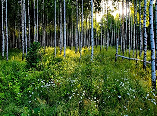 Leowefowa Vinyl 9X6FT Spring Backdrop Jungle Birch Forest Trees White Flowers Green Grass Nature Outdoor View Photography Background Kids Adultls Photo Studio Props
