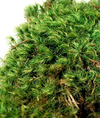 Way Home Fair Mood Moss 4 lbs 1'' Thick Natural