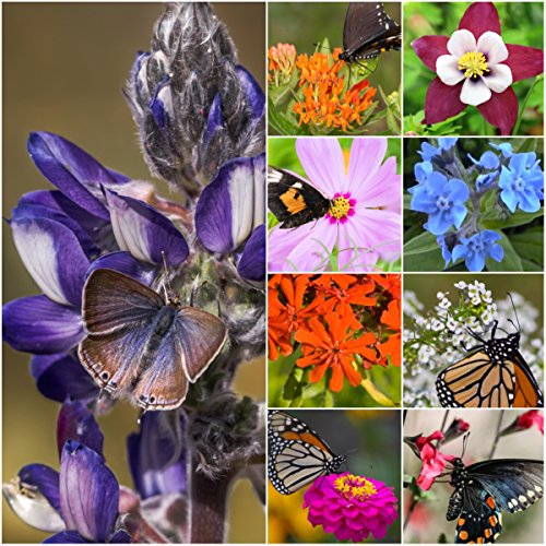 Flower Filled (Package of 30,000 Seeds, Bird and Butterfly Wildflower Mixture (100% Pure Live Seed) Non-GMO Seeds by Seed Needs …)