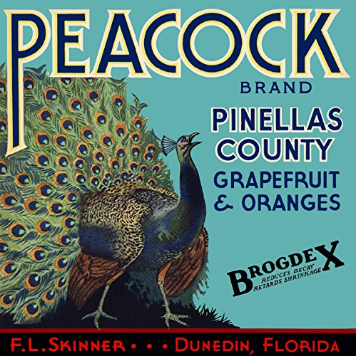 A SLICE IN TIME Dunedin, Pinellas County, Florida - Vintage Peacock Orange & Grapefruit Brogdex Citrus Fruit Crate Box Label Travel Advertising Art Print. Label Print Measures 10 x 10 inches