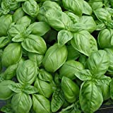 HERB Seed: SWEET BASIL - Fish, Pesto Sauces, Salad - 50 Fresh Seeds, Easy 2 Grow, High Quality, Germination