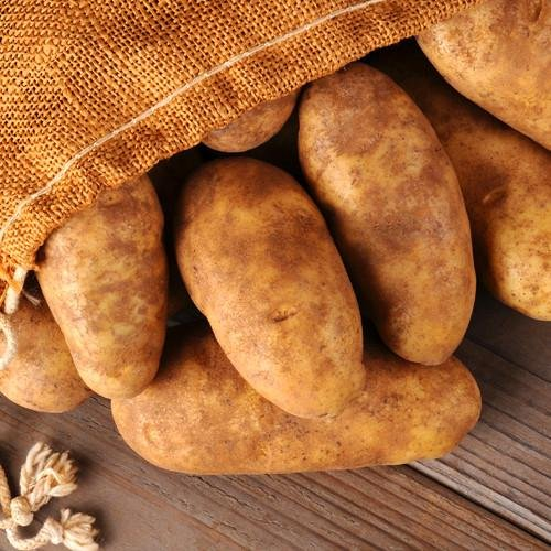 Simply Seed - Russet Burbanks - Organic Grown Seed Potatoes - 5 LBS - Ready for Spring Planting