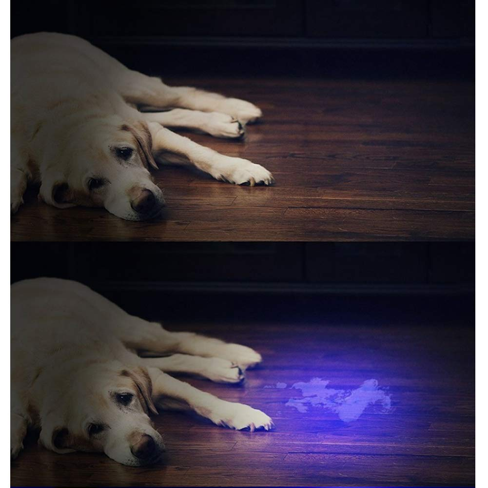 SADGE 2 Linterna UV, 21 LED UV Detector de luz Negra para detectar orina de Perro Manchas de Mascotas y chinches: Amazon.es: Productos para mascotas