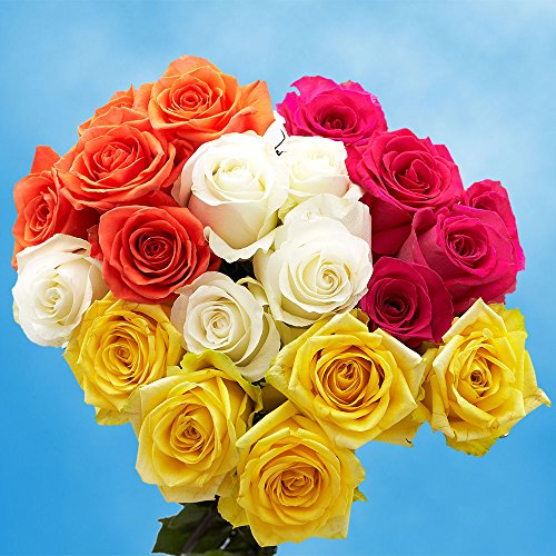 GlobalRose 50 Fresh Cut Long Stem Roses - Perfect for Birthday, Anniversary or any occasion.