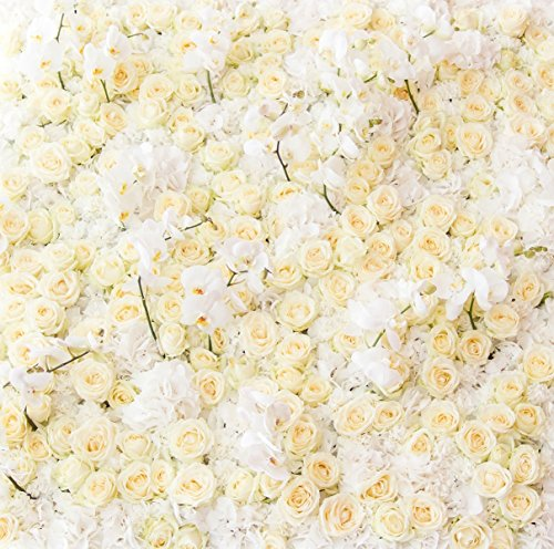 - Kate 8x8ft Wedding Background Photography Flower Backdrops Beige Rose Wall Romantic for Thick Birthday Backdrop(with Pocket)